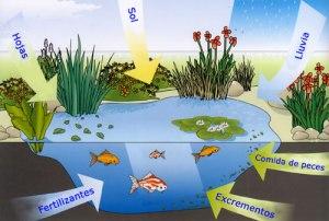 esquema-contaminacion-del-estanquew